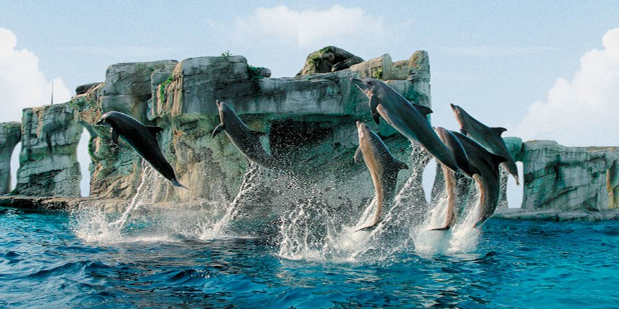 Dolphin  Experience incontra i Delfini