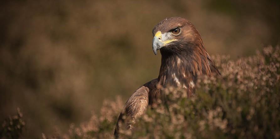 Eagle Experience incontra  i Rapaci