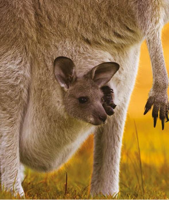 Australia Experience incontra i Wallaby