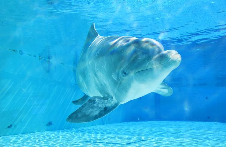 We Care, l'unione fa la forza: a Oltremare è arrivata la delfina Veera
