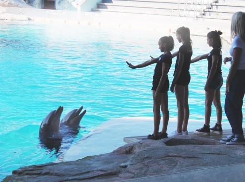 Nazionale Juniores Ginnastica Artistica tra i delfini