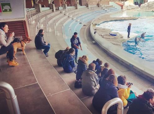 Istruttori cinofili a lezione da trainer, keeper e falconoieri di Oltremare