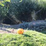 La zucca di Halloween nella casa dei wallaby!