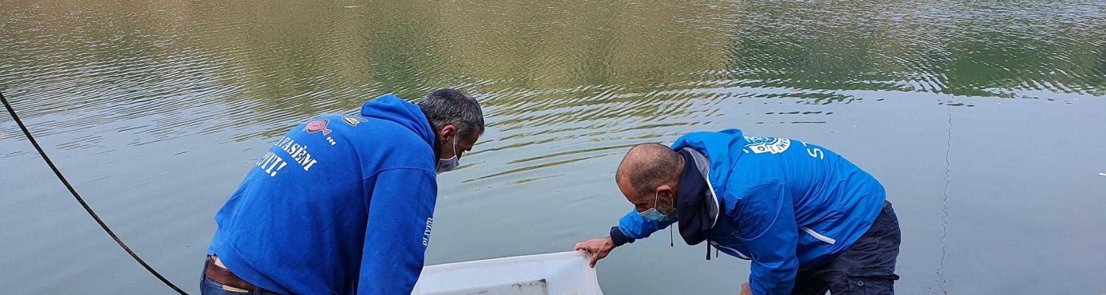 Liberazione di storioni e anguille nel Delta del Po