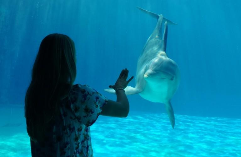 Dalmazia - La finestra sui delfini
