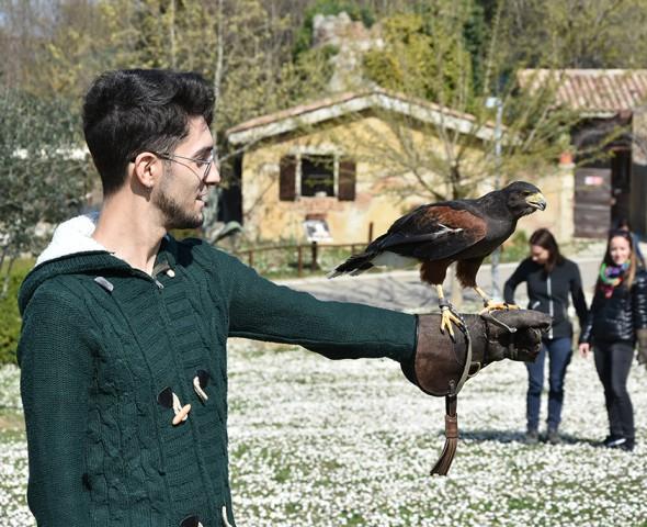 A scuola di falconeria