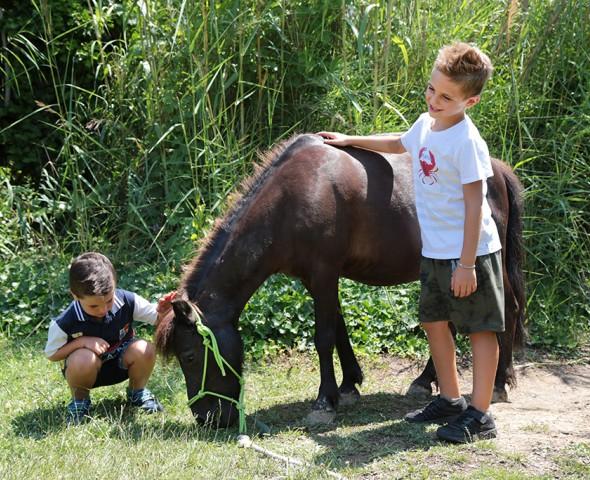 Il pony, il bambino e i 5 sensi