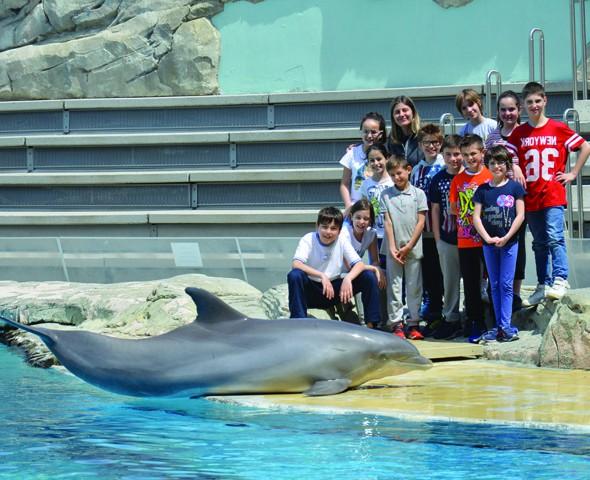 Il mondo dei delfini: gestione e addestramento