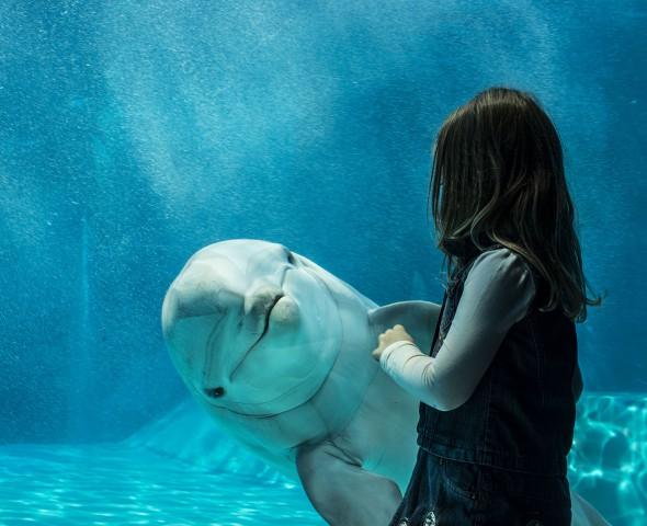 Delfini: pesci o mammiferi