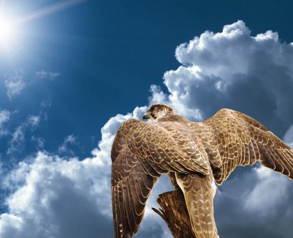 Il volo dei rapaci i signori dell'aria