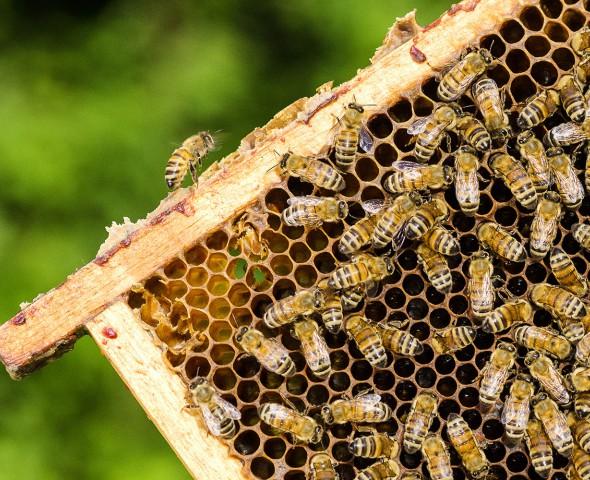 La geometria delle api