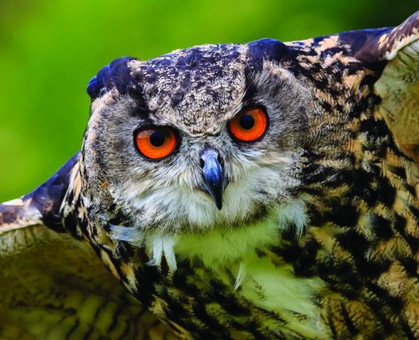 Predatori e prede: occhio non vede...bocca non mangia