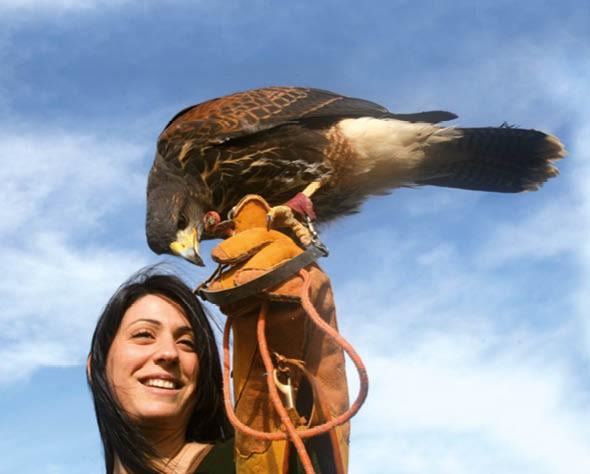 Meet the birds of prey