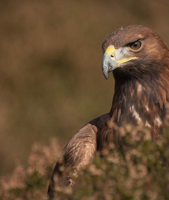 Eagle Experience meet the Birds of prey