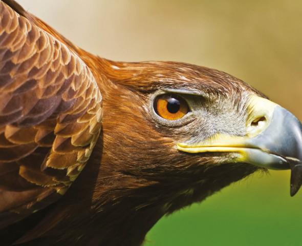 The air predators: the birds of prey